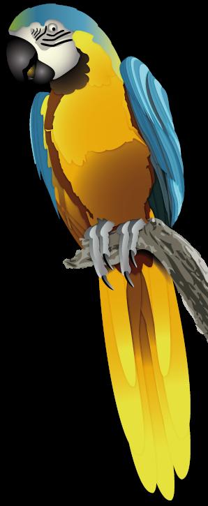 Club Ornithologique Drôme-Ardèche